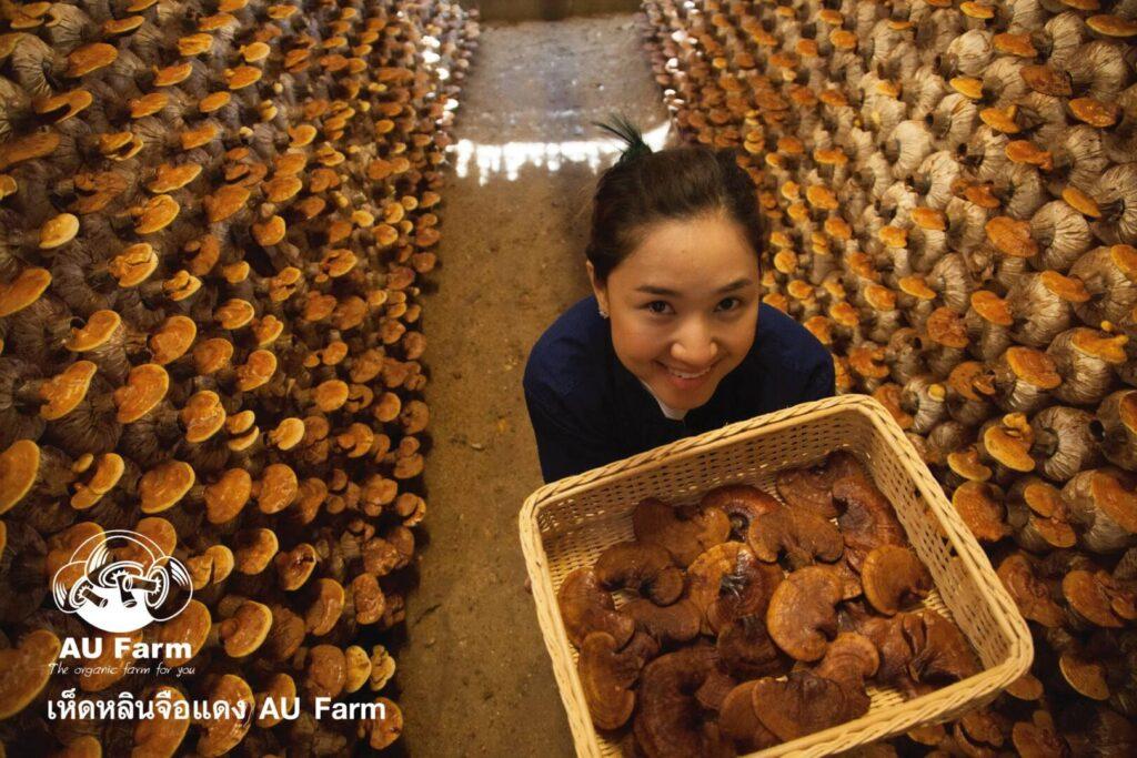 เห็ดหลินจือแดง AU Farm